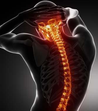 spine-image